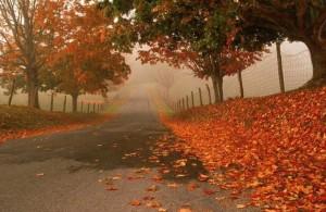 foto_autunno_358